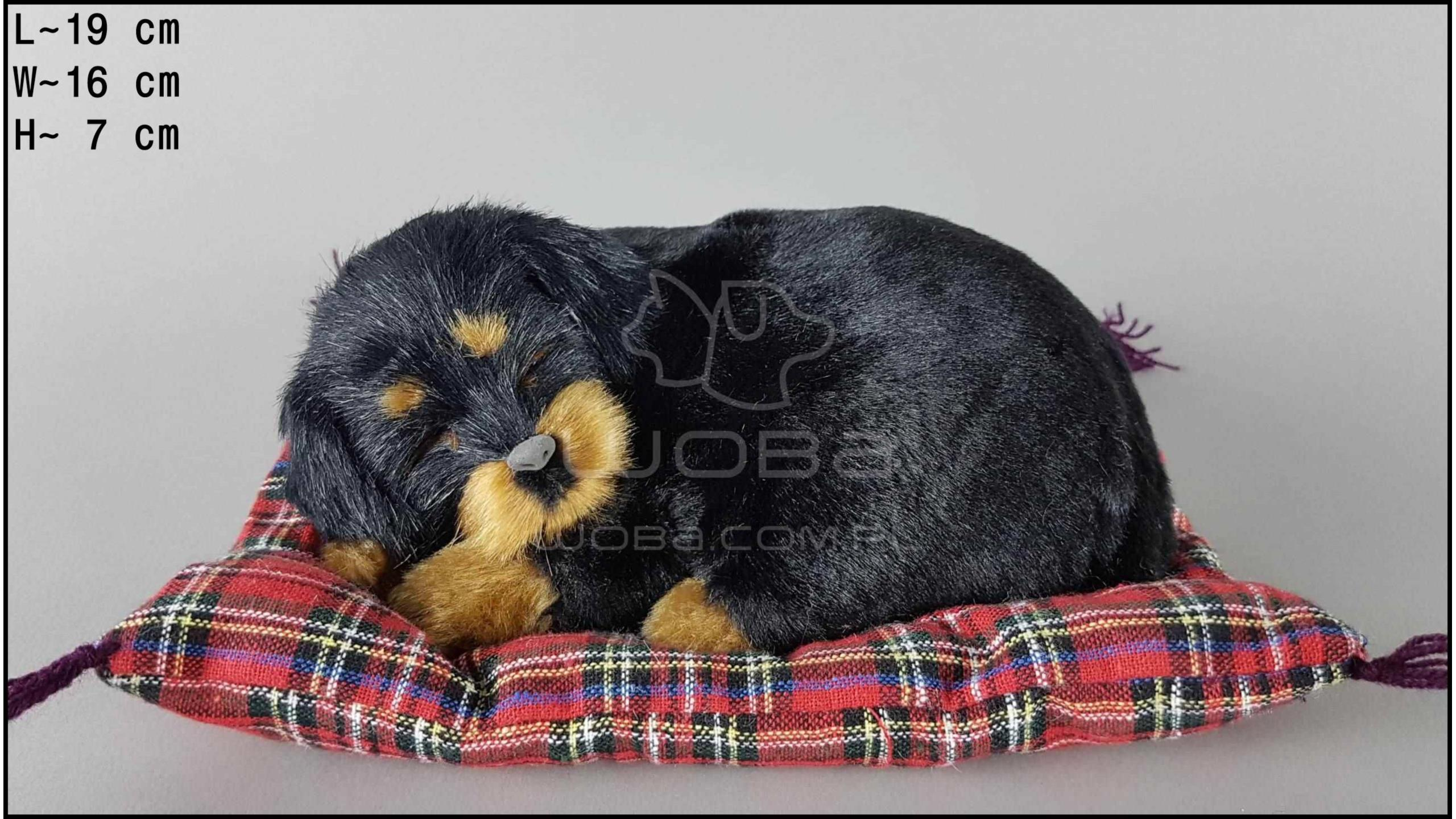 Dog Rottweiler on a pillow - Size S