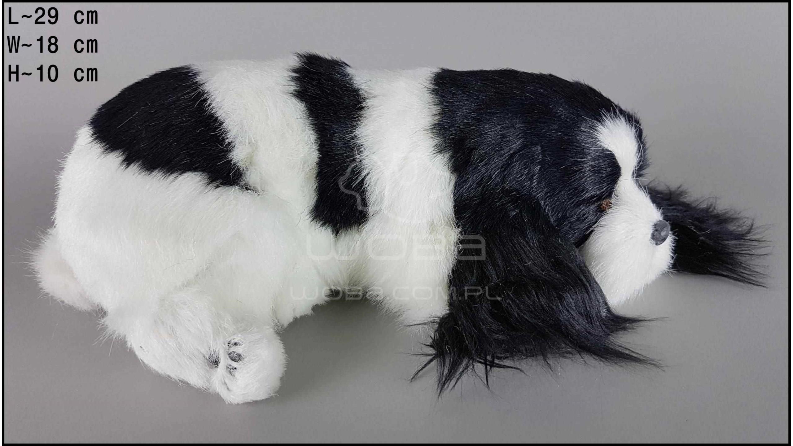 Cocker Spaniel Rozmiar L - Czarno-Biały