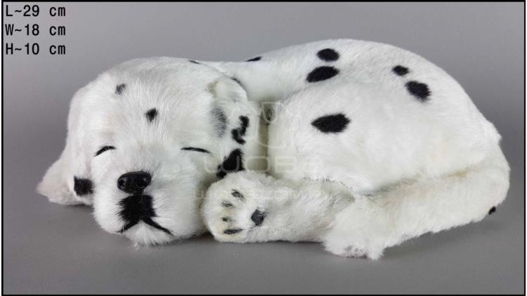 Dalmatian - Size L