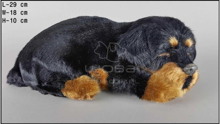 Dog Rottweiler - Size L