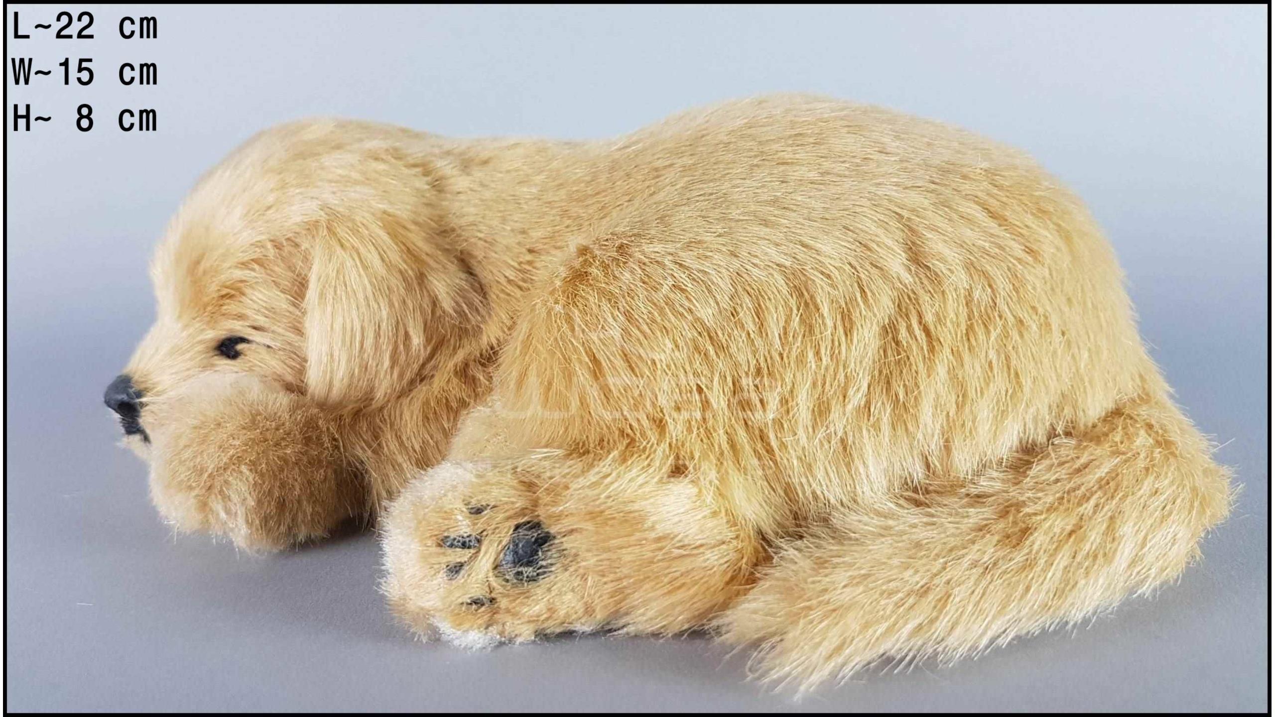 Dog Labrador - Size M - Biscuit