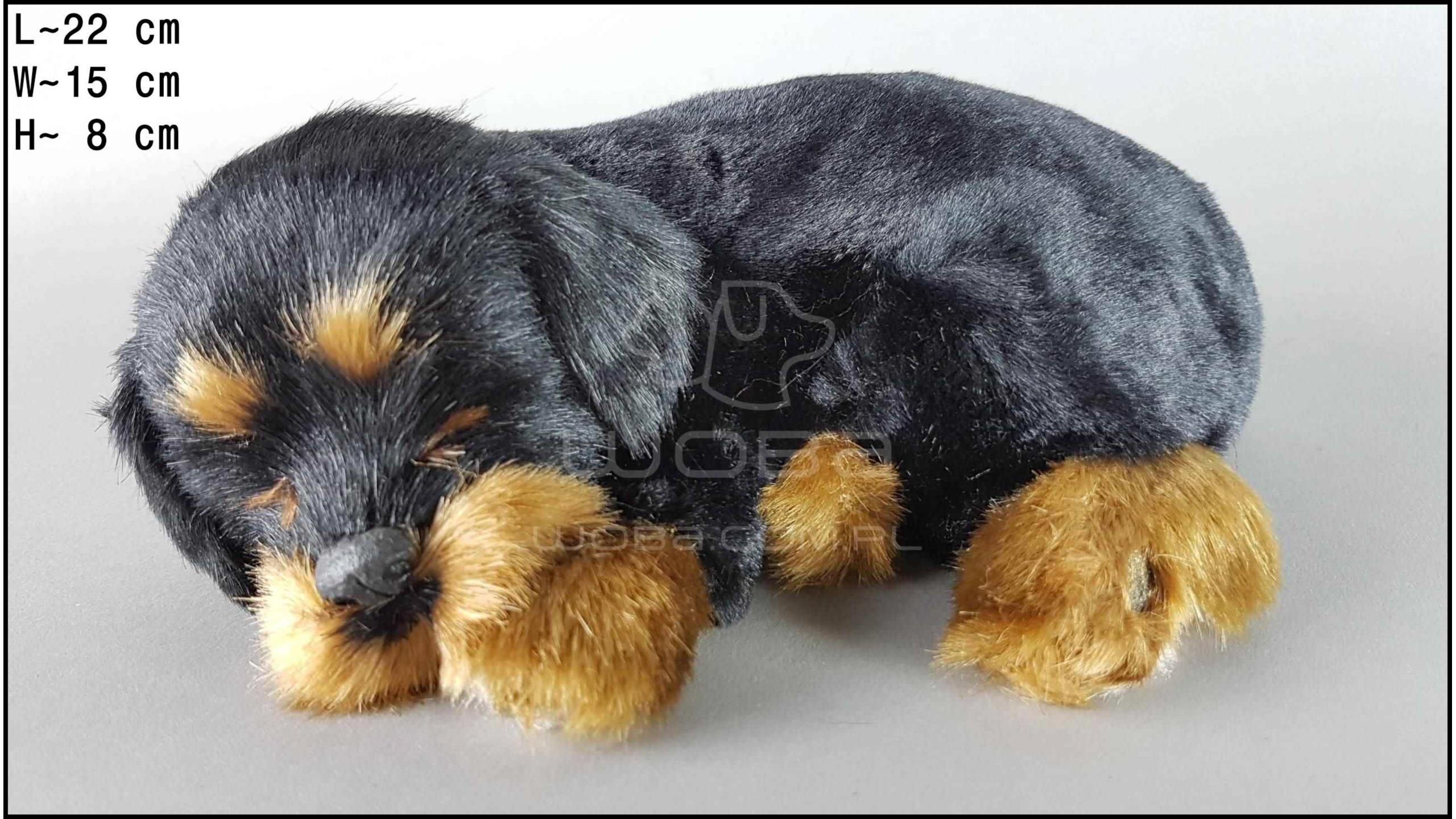 Dog Rottweiler - Size M