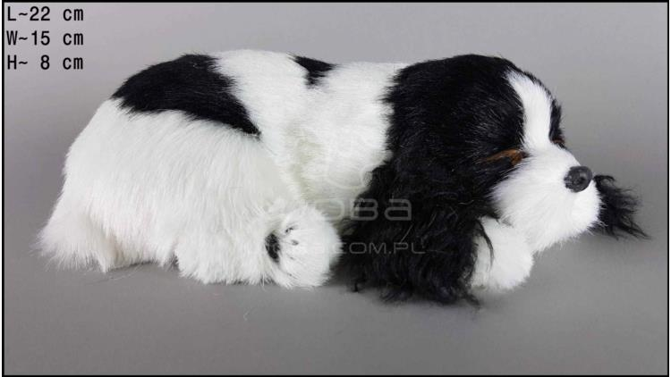 Dog Cocker Spaniel - Size M - Black & White