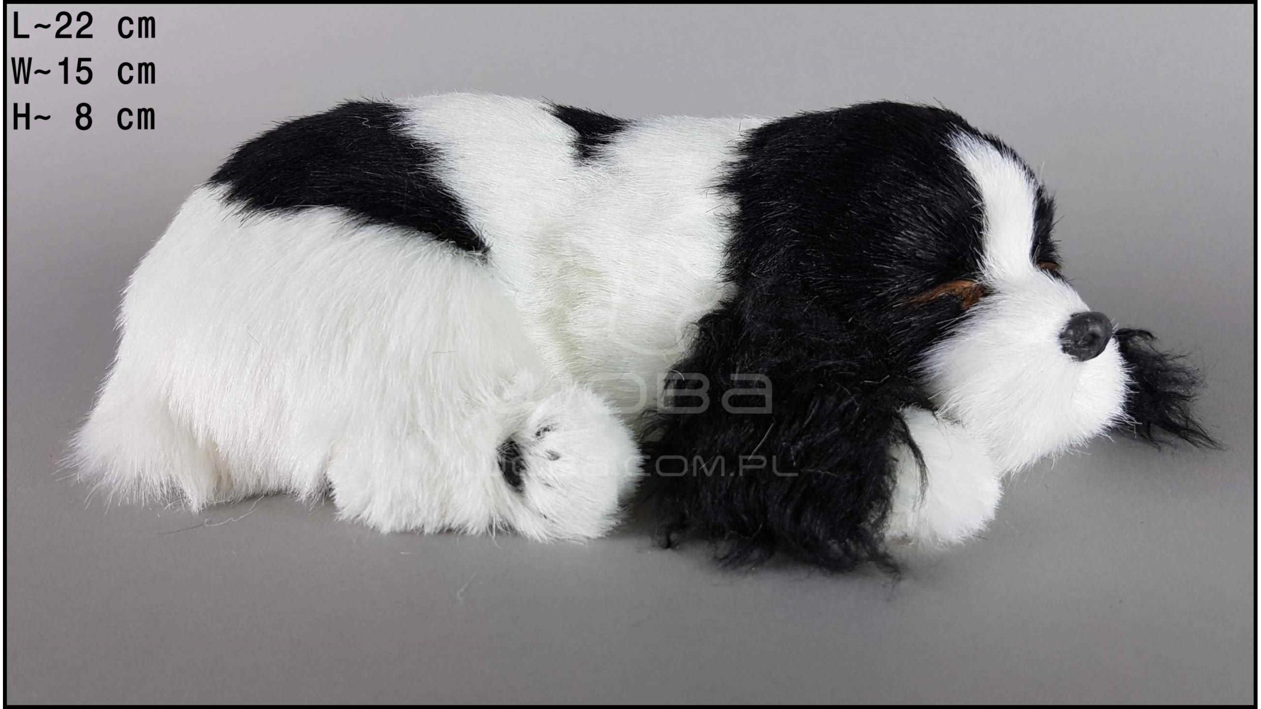 Pies Cocker Spaniel Rozmiar M - Czarno-Biały