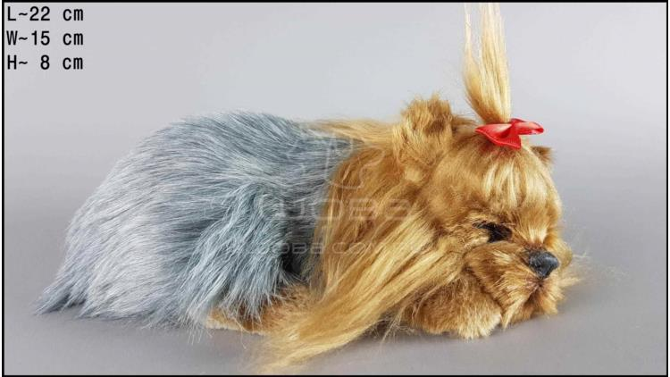 Dog Yorkshire Terrier - Size M