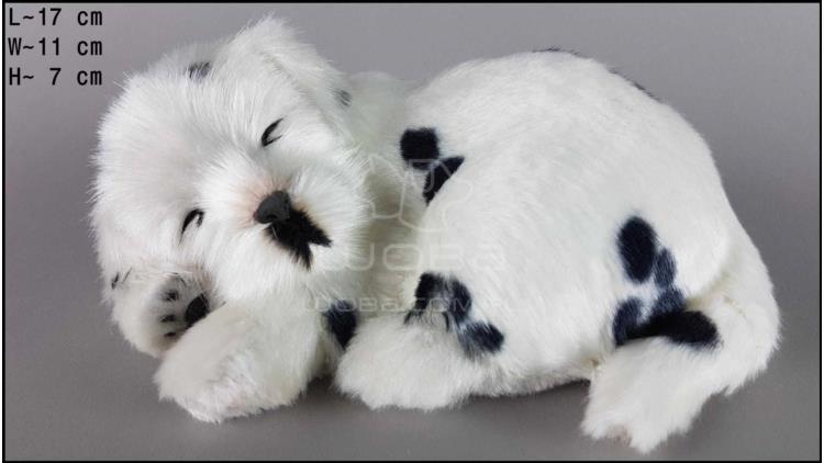 Dog Dalmatian - Size S