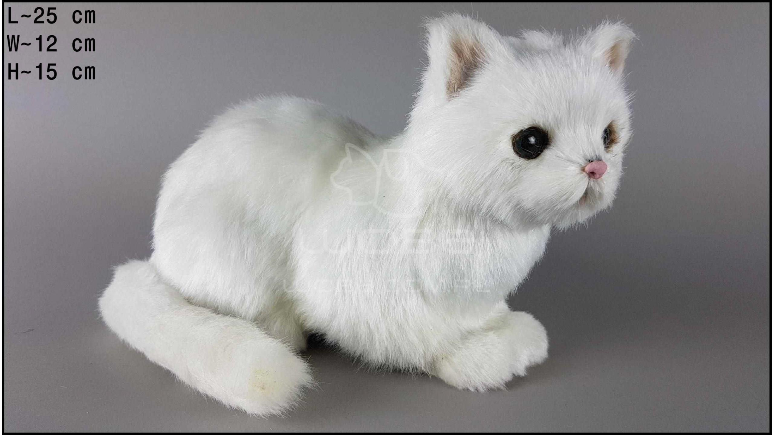 Large cat sitting - White