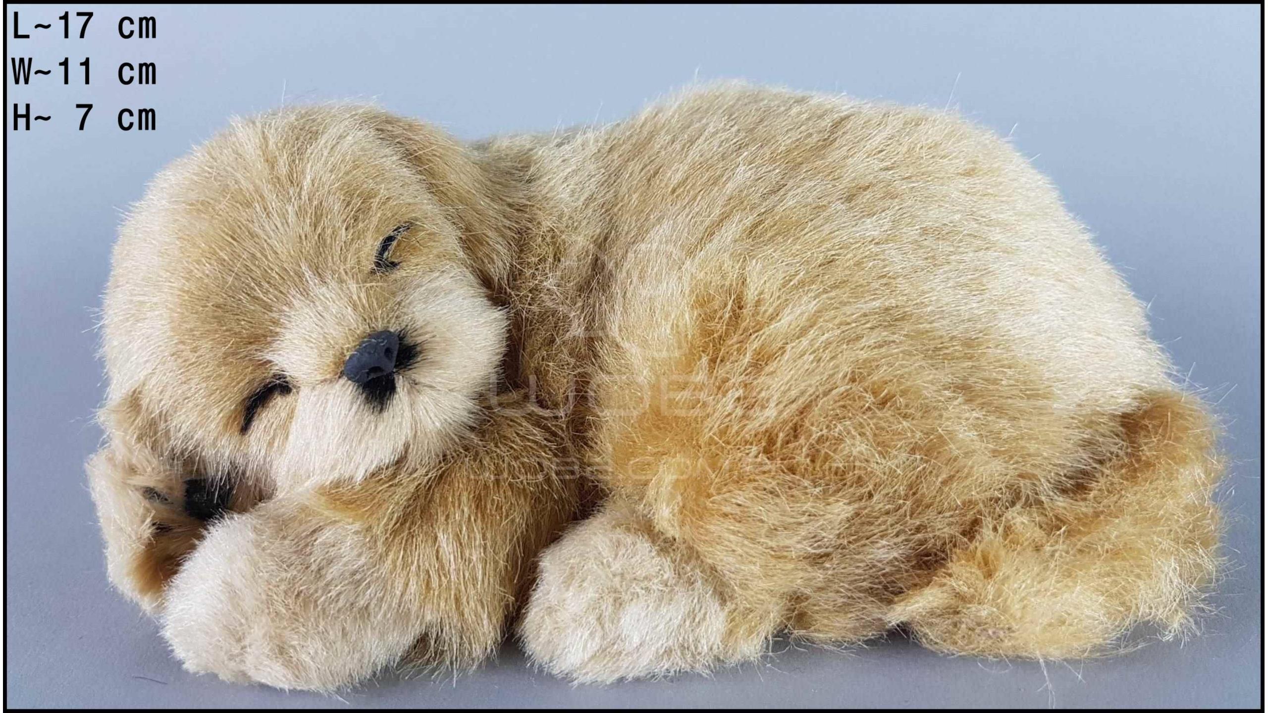 Pies Labrador Rozmiar S - Biszkoptowy