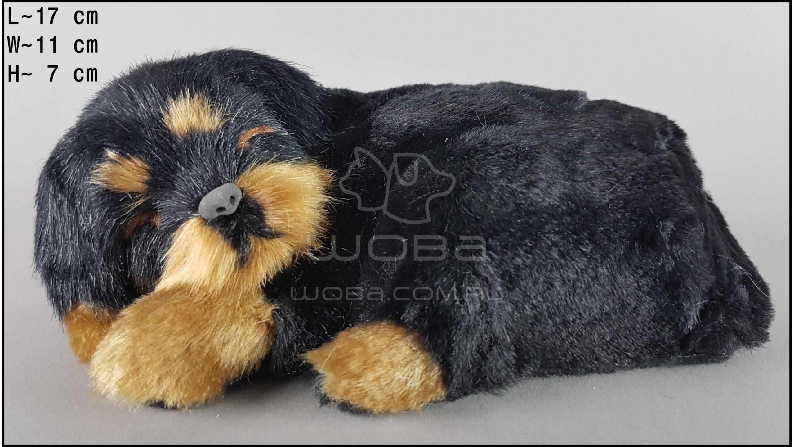 Pies Rottweiler Rozmiar S