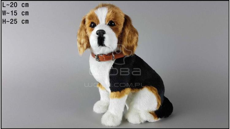 Large dog - Beagle