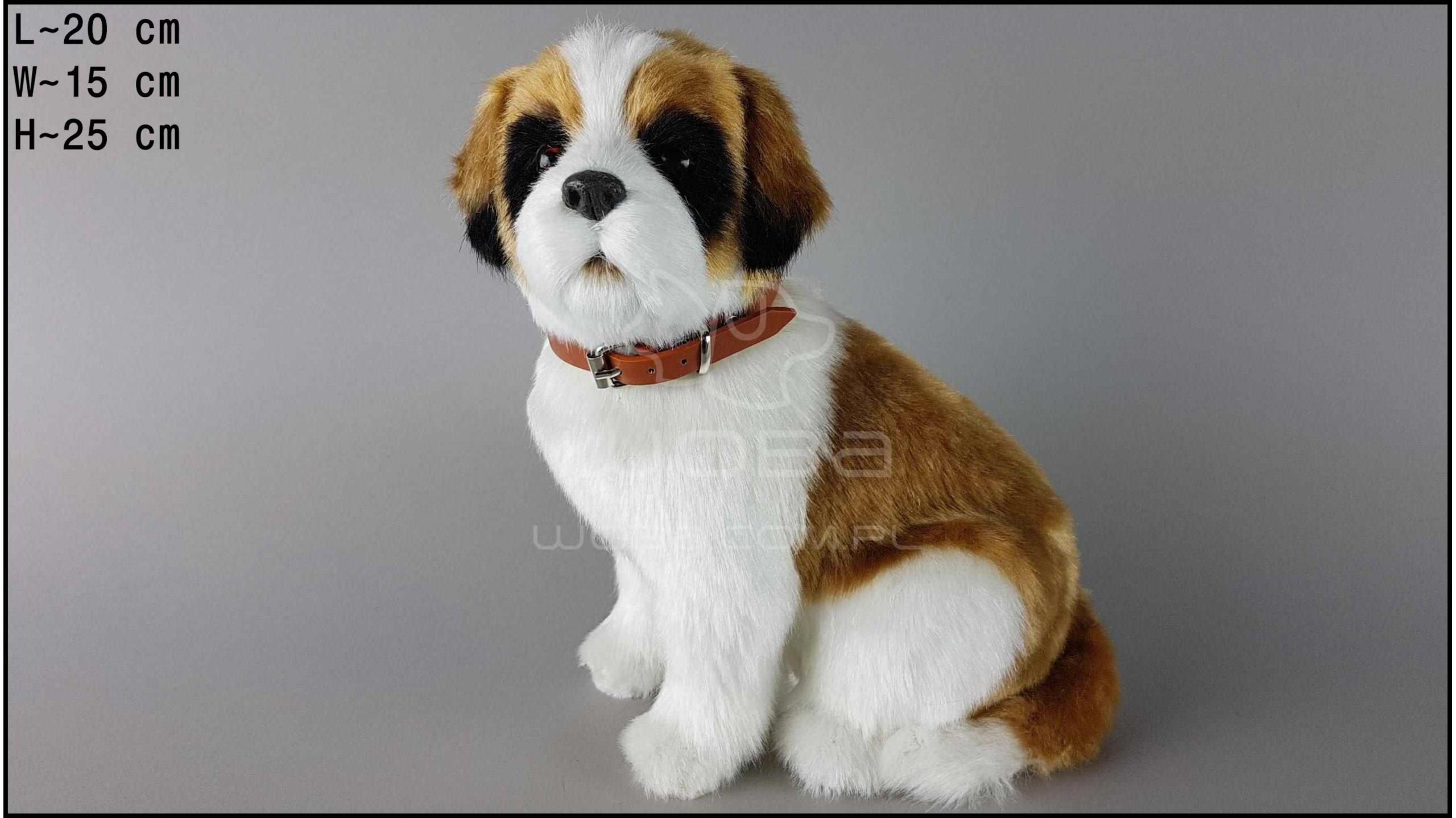 Pies duży - Bernardyn