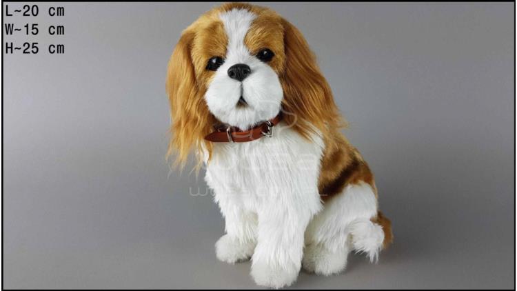 Large dog - Charles Spaniel - Yellow