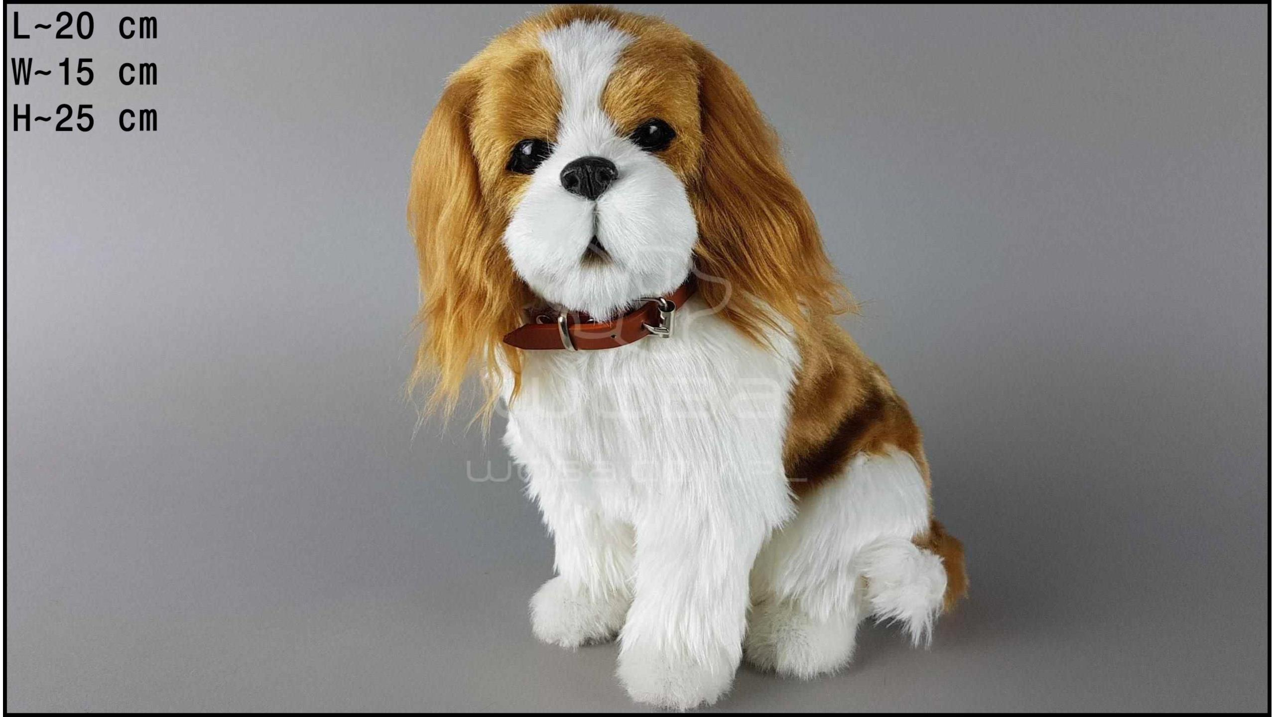 Large dog - Charles Spaniel - Yellow
