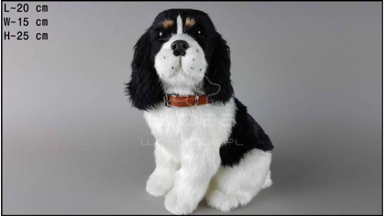 Large dog - Cocker Spaniel - Black & White