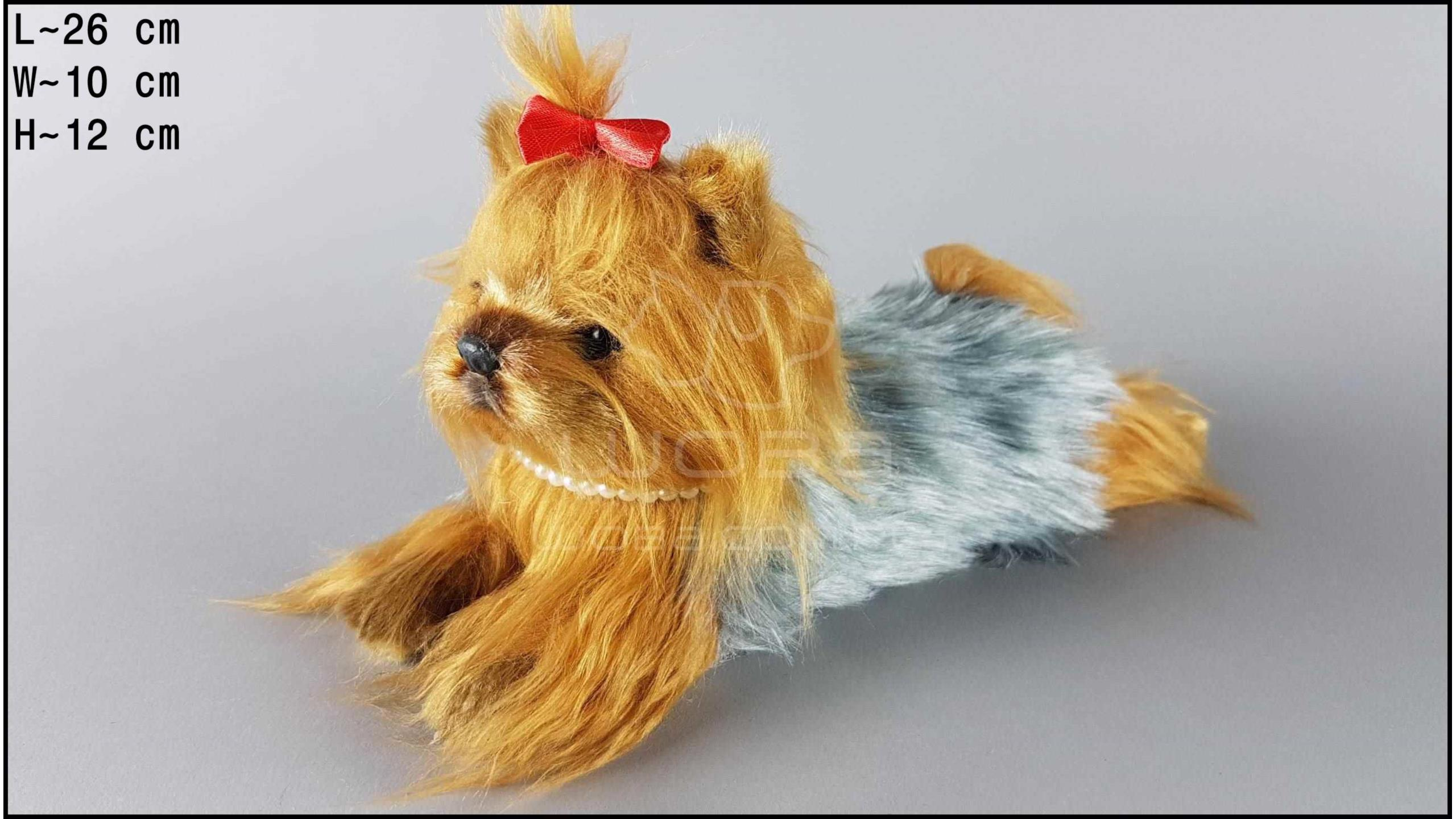 Yorkshire Terrier - Sitting