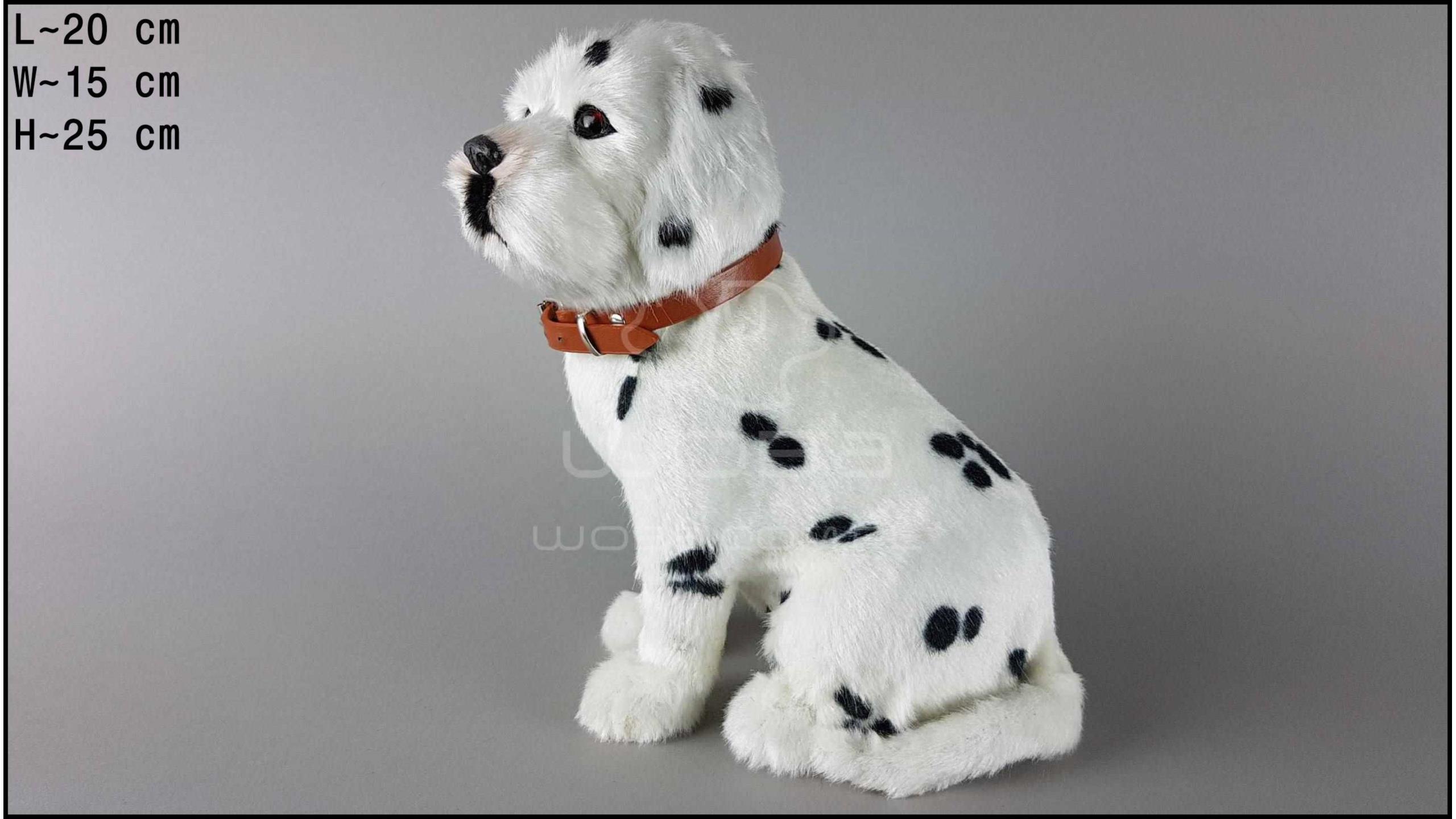 Pies duży - Dalmatyńczyk