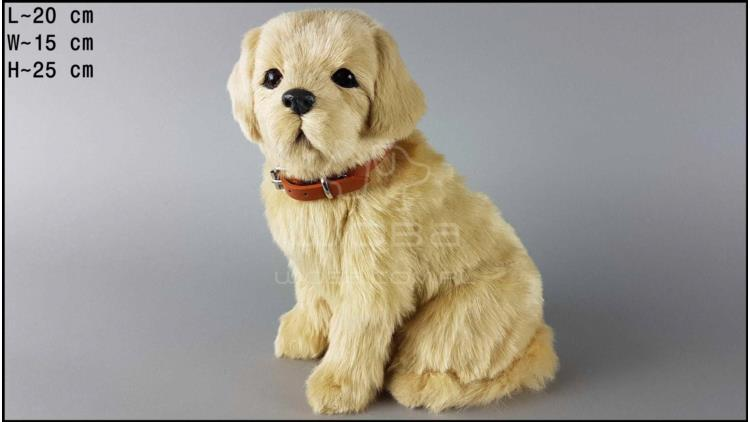 Large dog - Golden Retriever