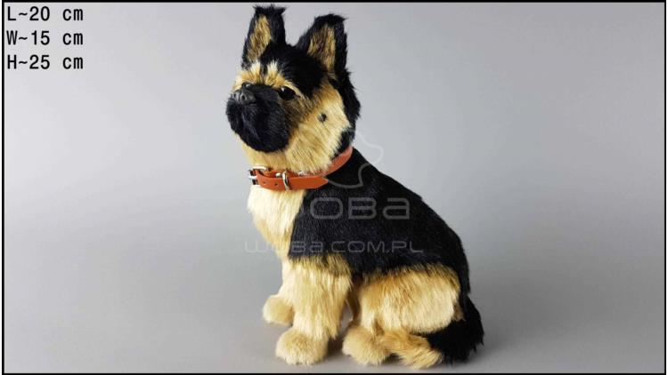 Large dog - German shepherd
