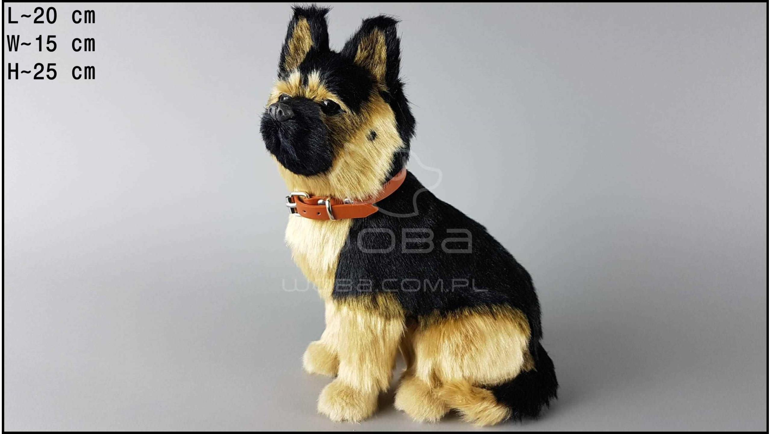 Large dog - German shepherd