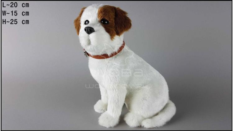 Large dog - Jack Russell