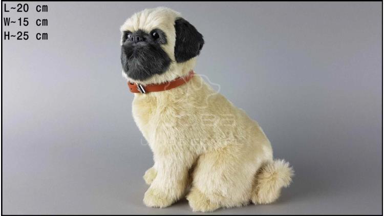 Large dog - Pug