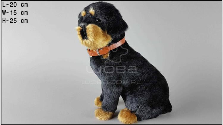 Large dog - Rottweiler