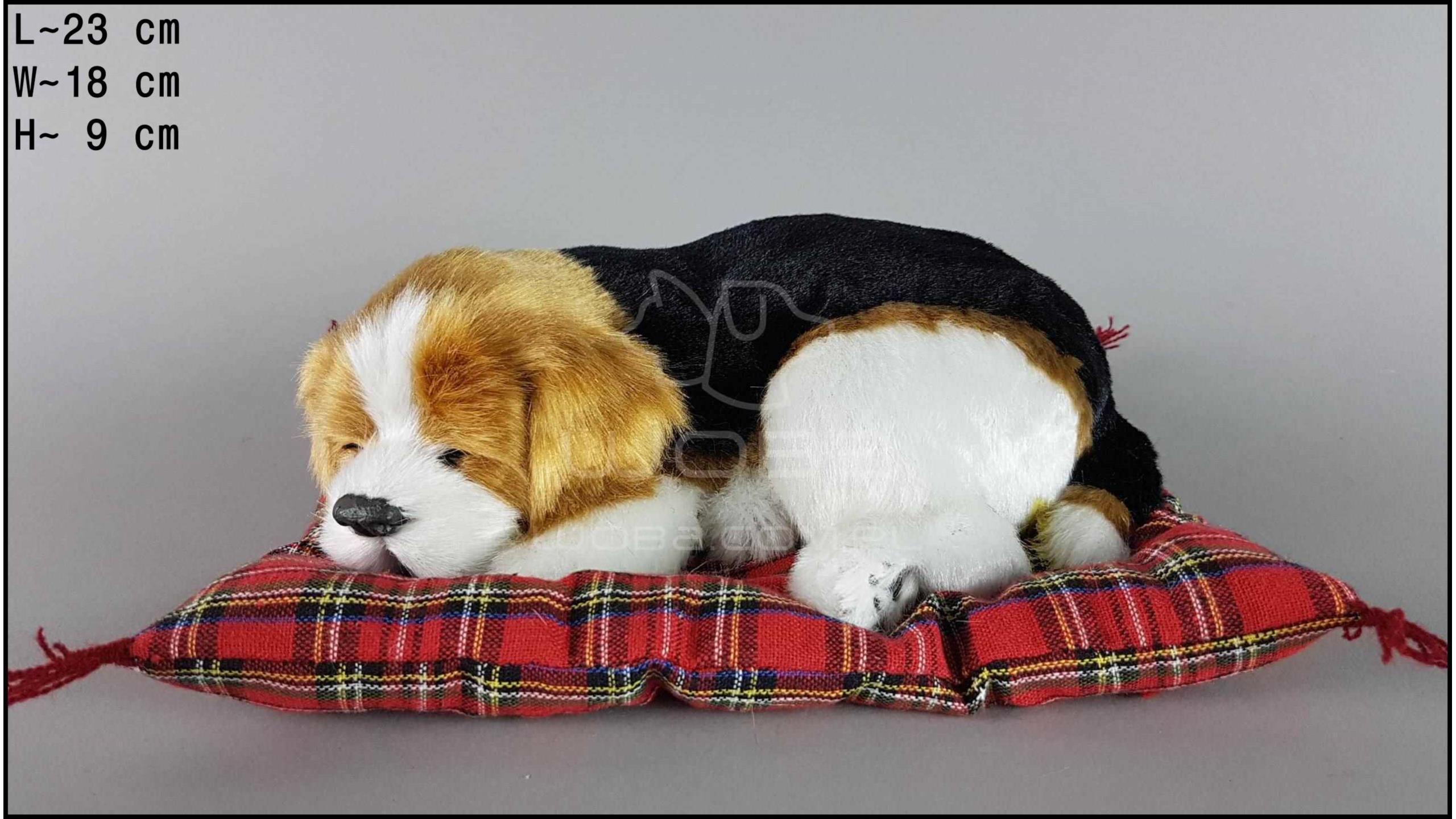 Pies Beagle na poduszce Rozmiar M
