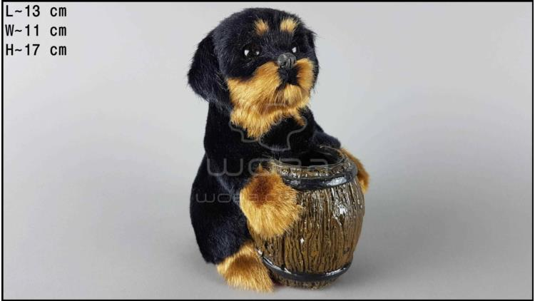 Dog with a barrel - Rottweiler