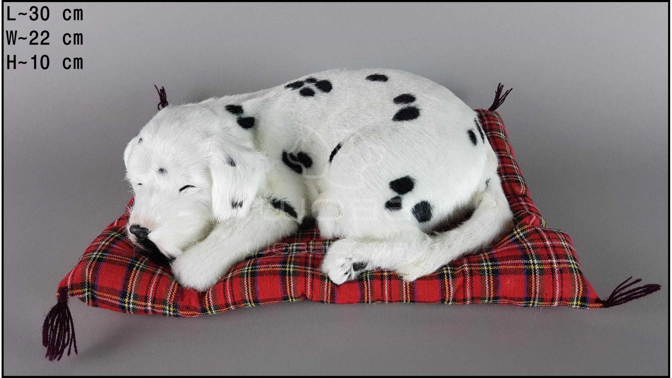 Pies Dalmatyńczyk na poduszce Rozmiar L