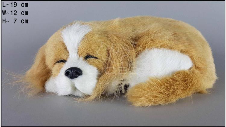 Sleeping Cocker Spaniel