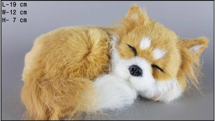 Sleeping Chihuahua (brown)