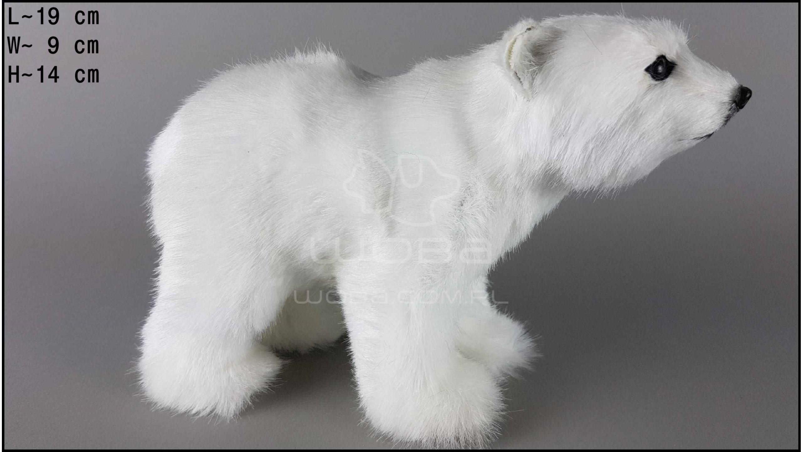 Polar bear - Standing