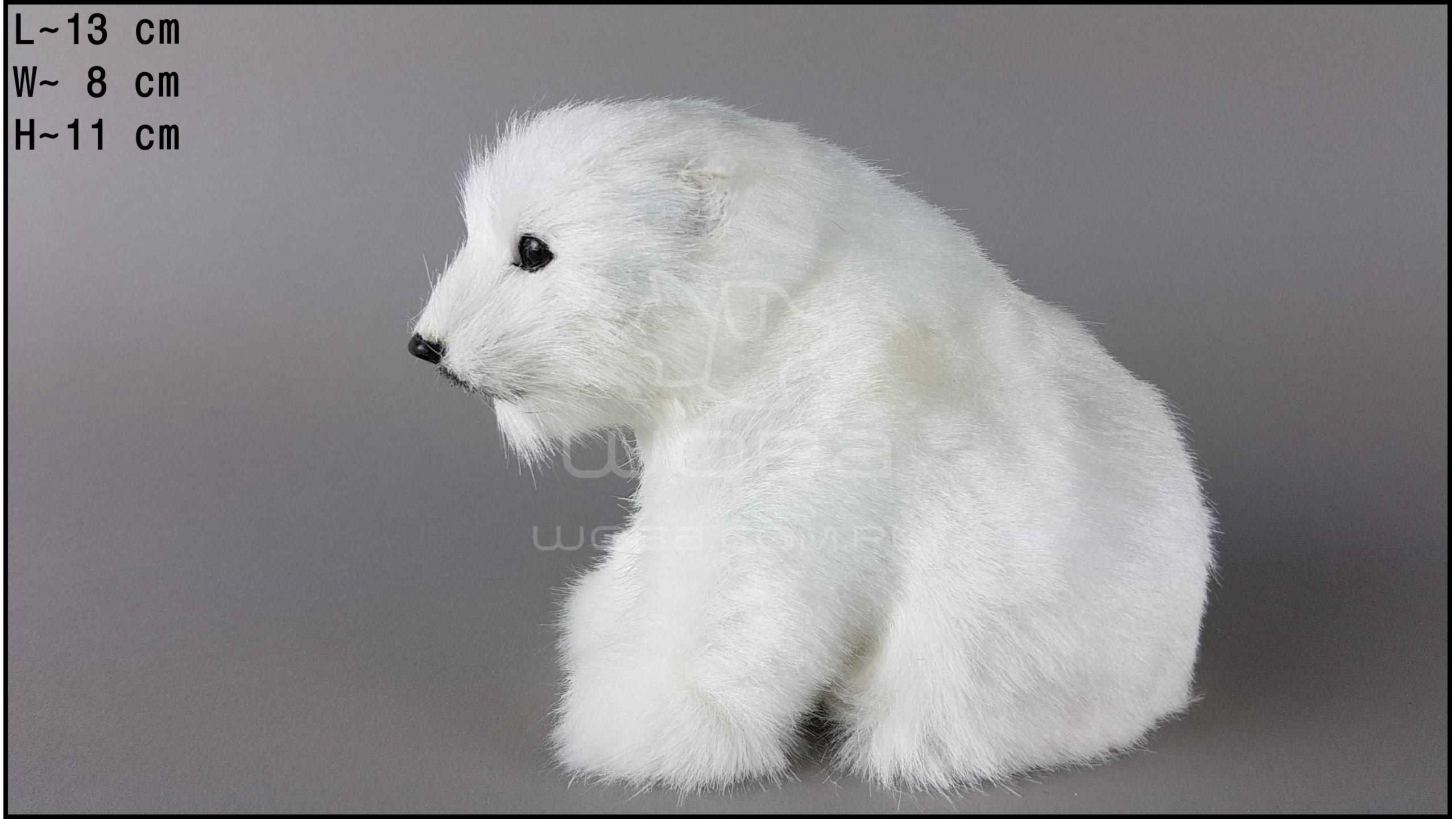 Niedźwiedź polarny Siedzący