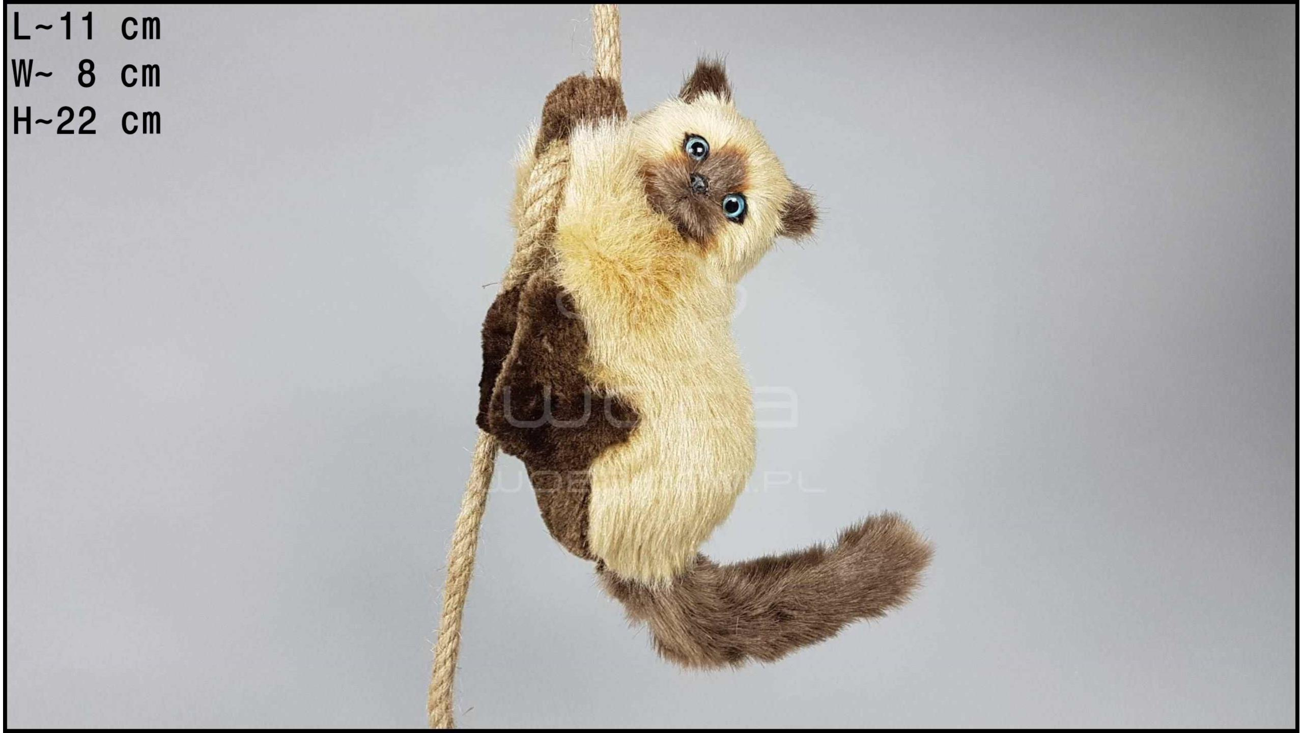 Cat climbing a rope - Cream-coloured