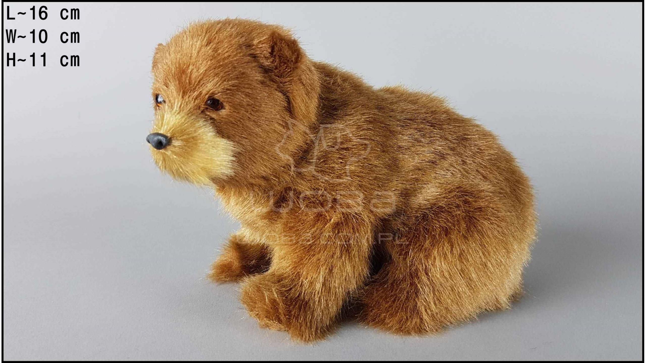 Brown bear - Sitting