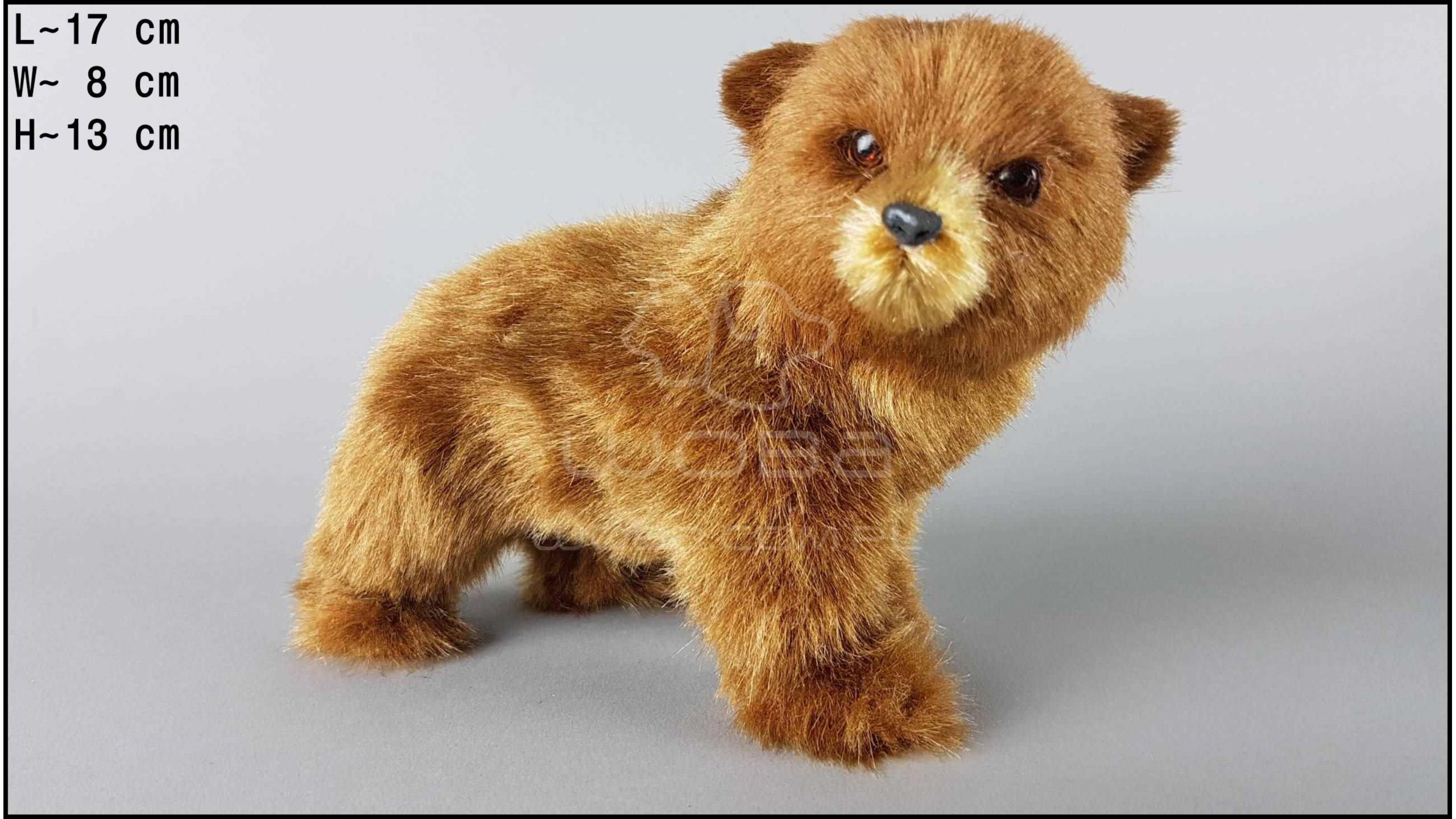 Brown bear - Standing