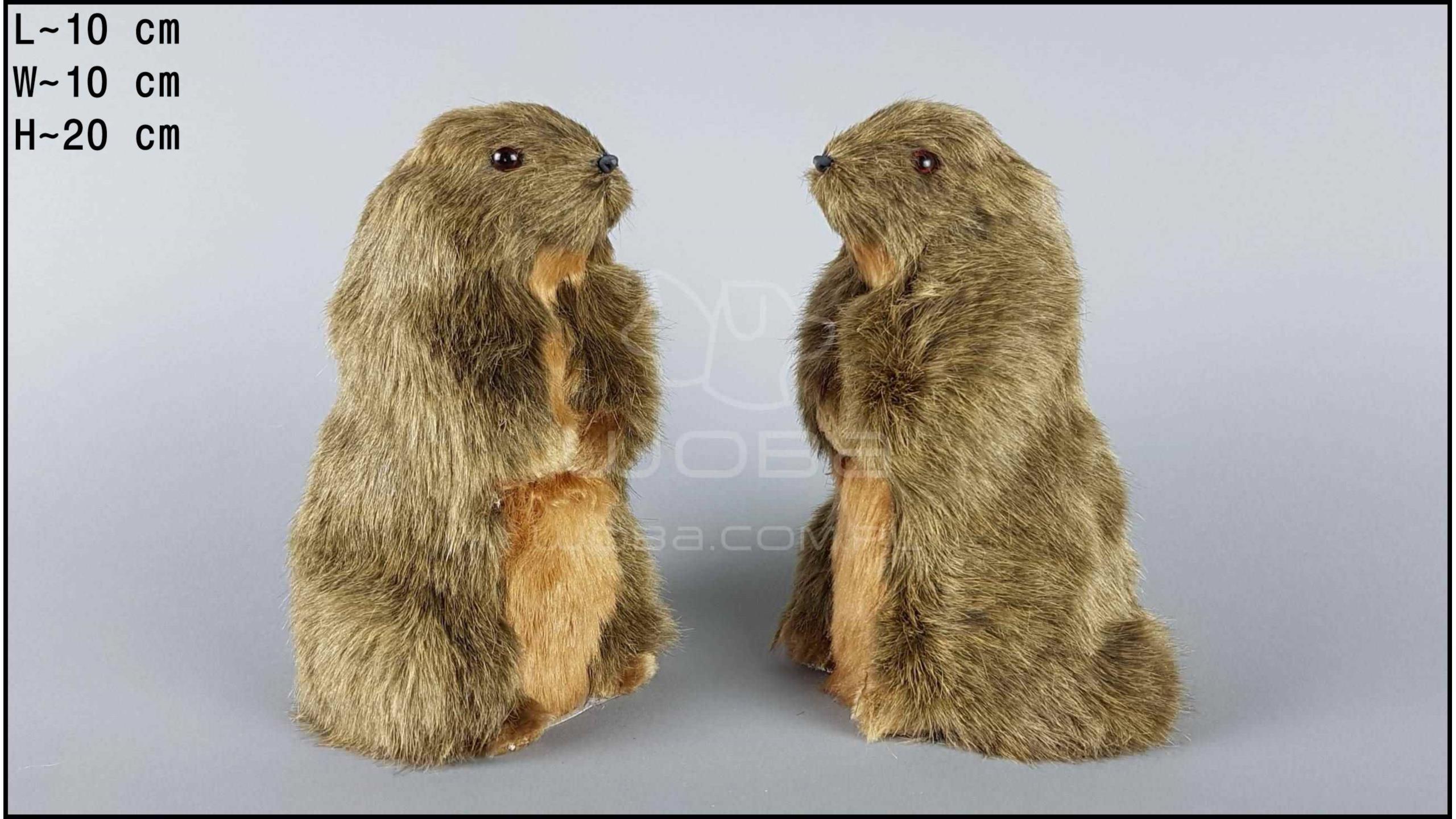 Marmots (2 pcs in a box)