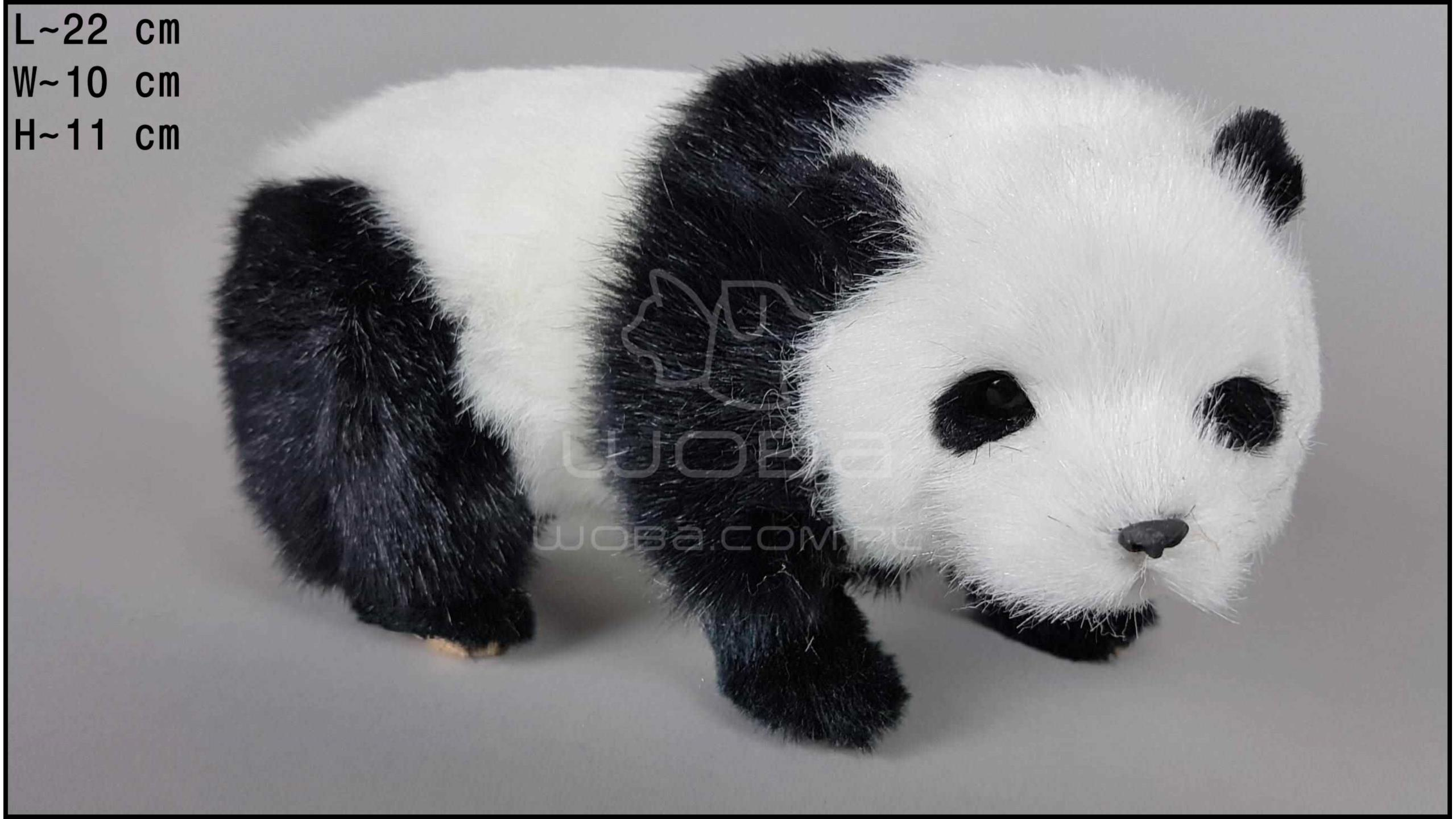 Panda Stojąca