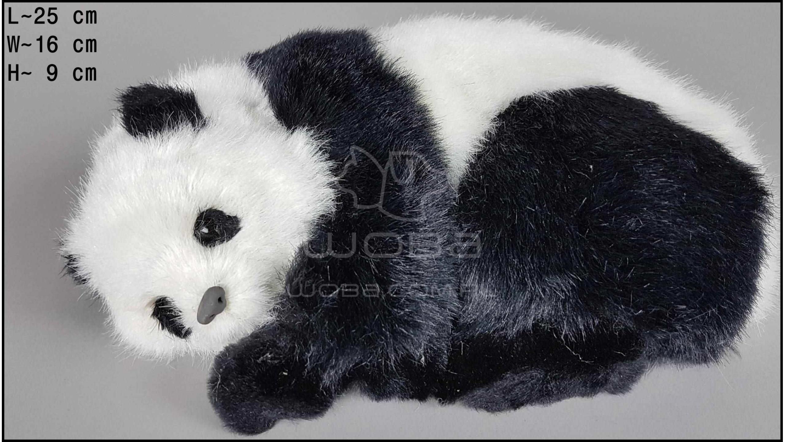 Panda Leżąca
