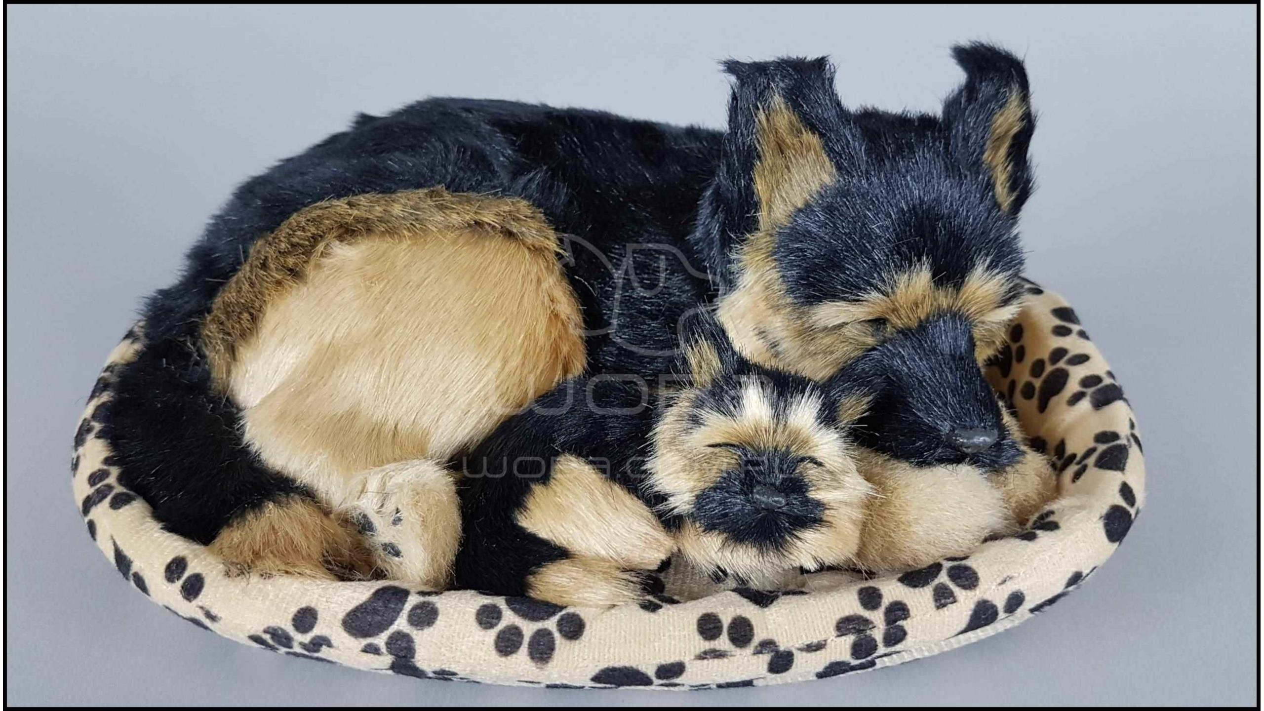 Large dog in a cot, with a puppy - Germain shepherd