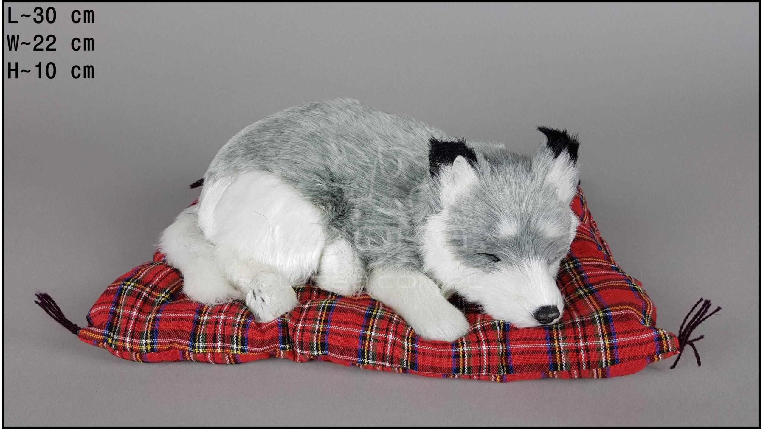 Pies Husky na poduszce Rozmiar L