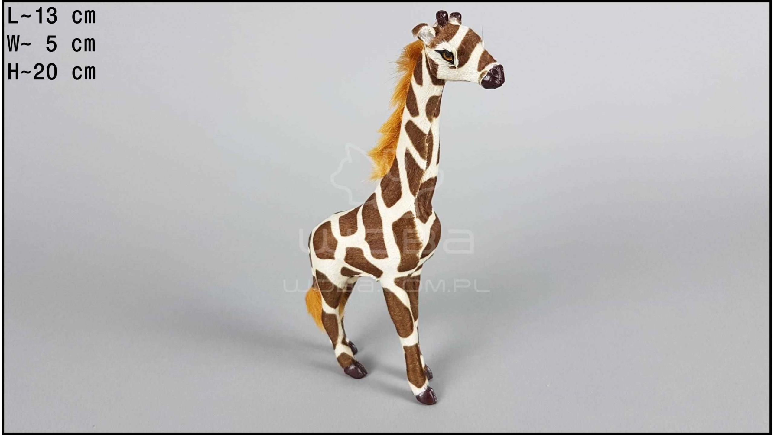 Żyrafa stojąca