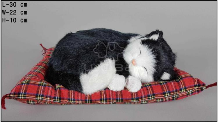 Cat sleeping on a pillow - Size L - Black & White