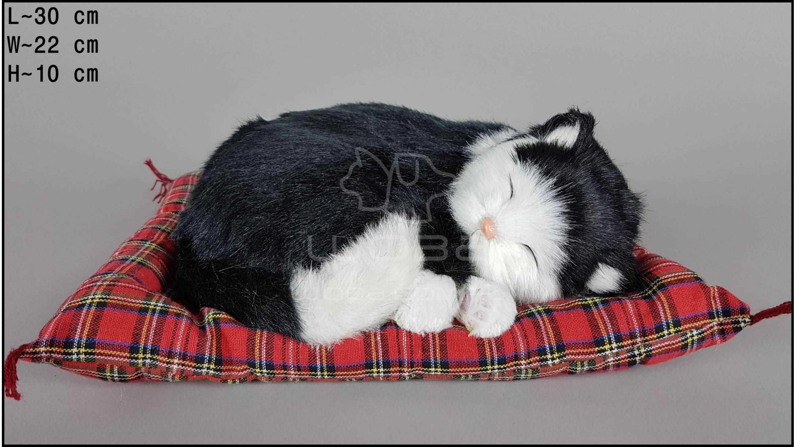 Kot śpiący na poduszce Rozmiar L - Czarno-Biały