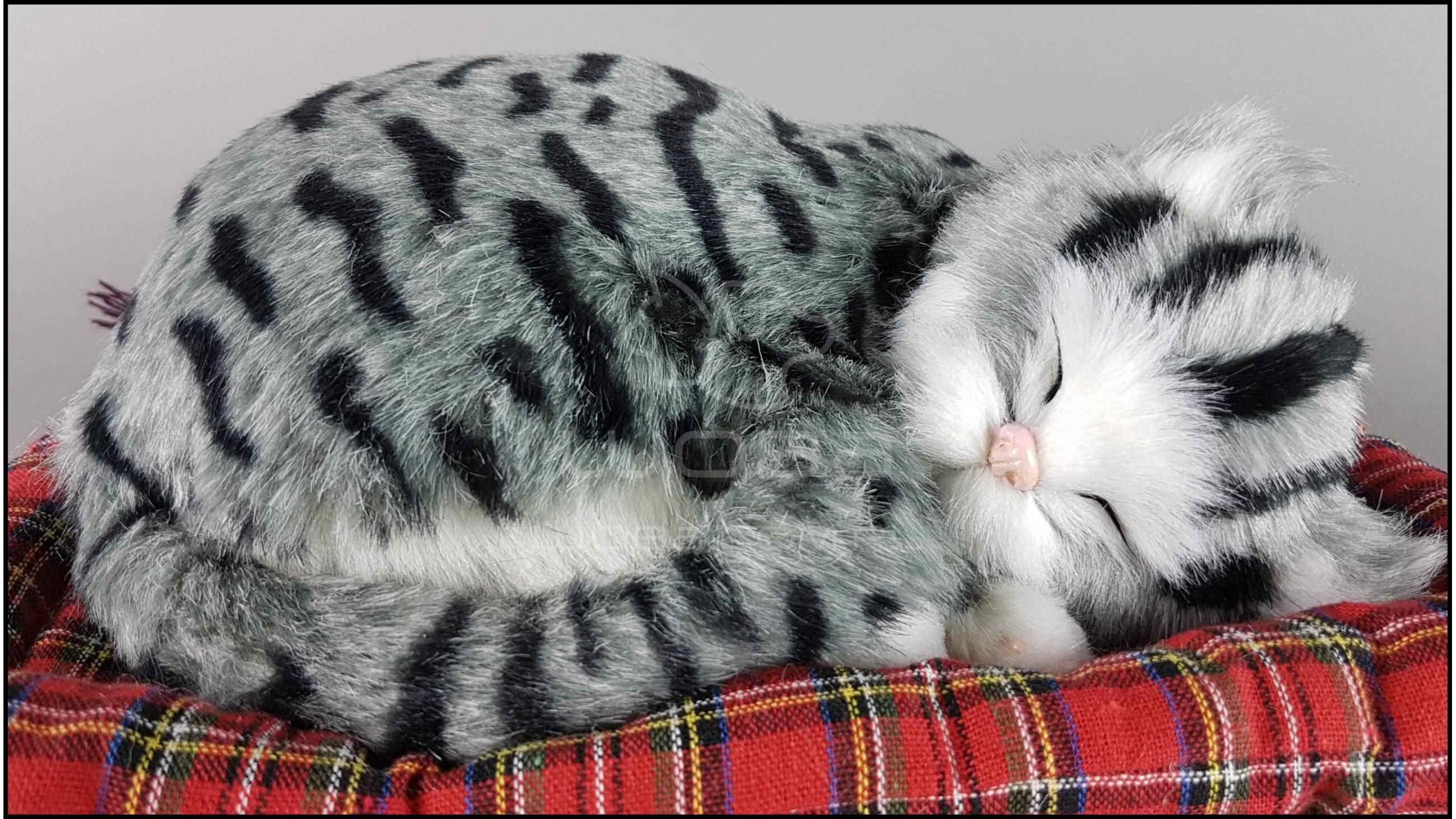 Veľká mačička v HD