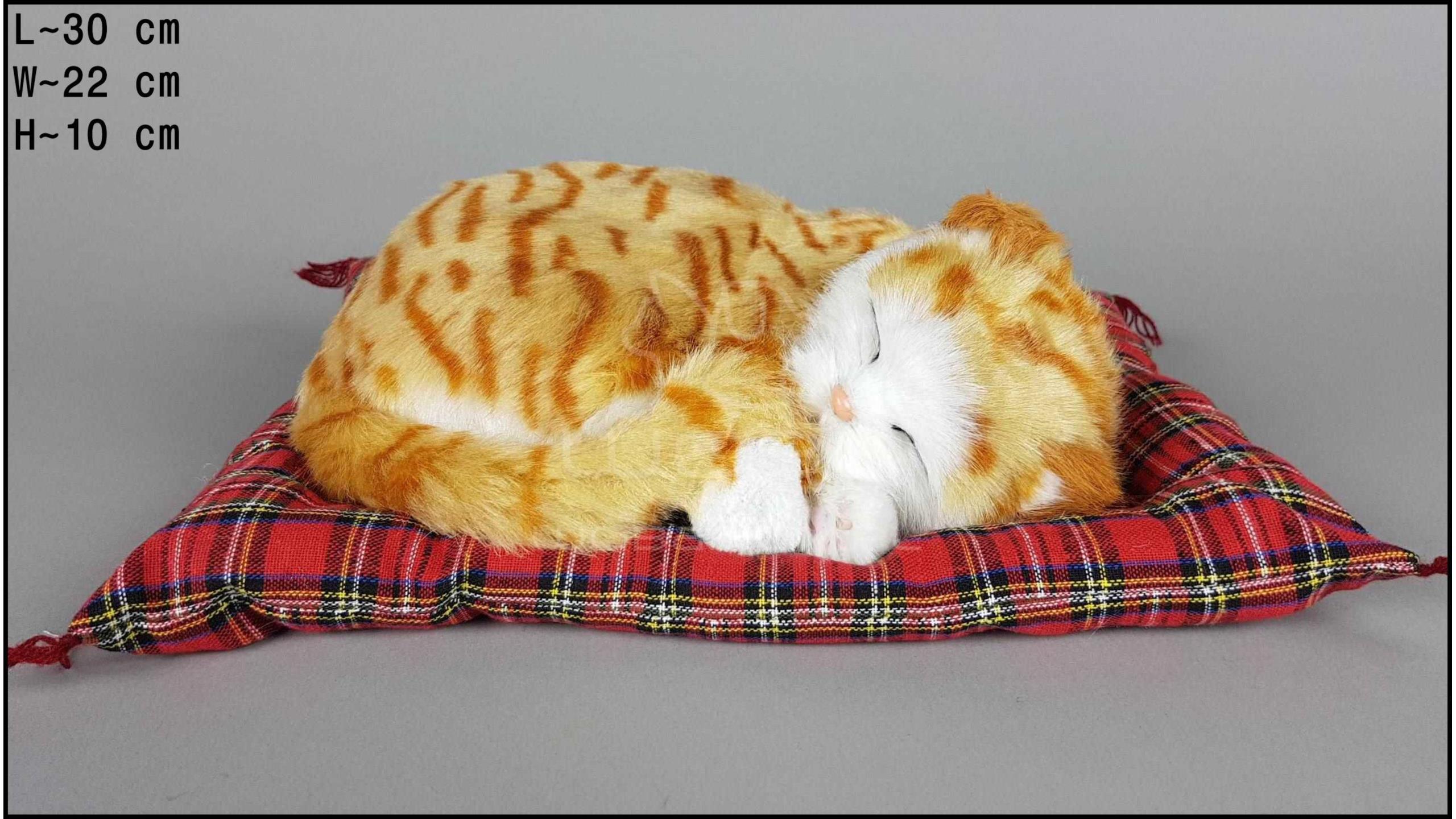 Kot śpiący na poduszce Rozmiar L - Rudy