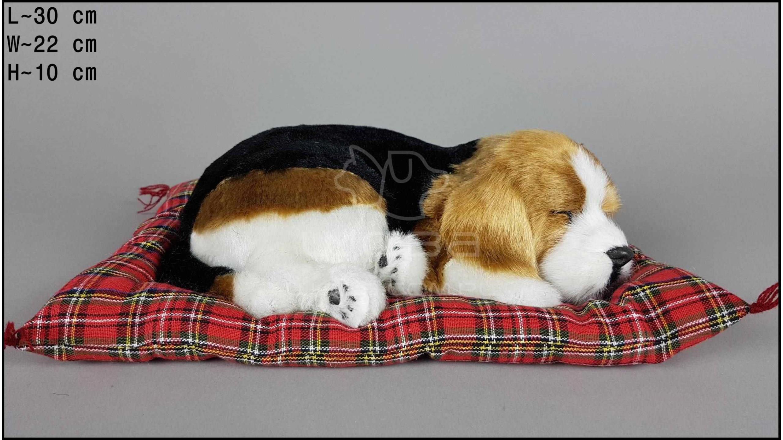 Pies Beagle na poduszce Rozmiar L