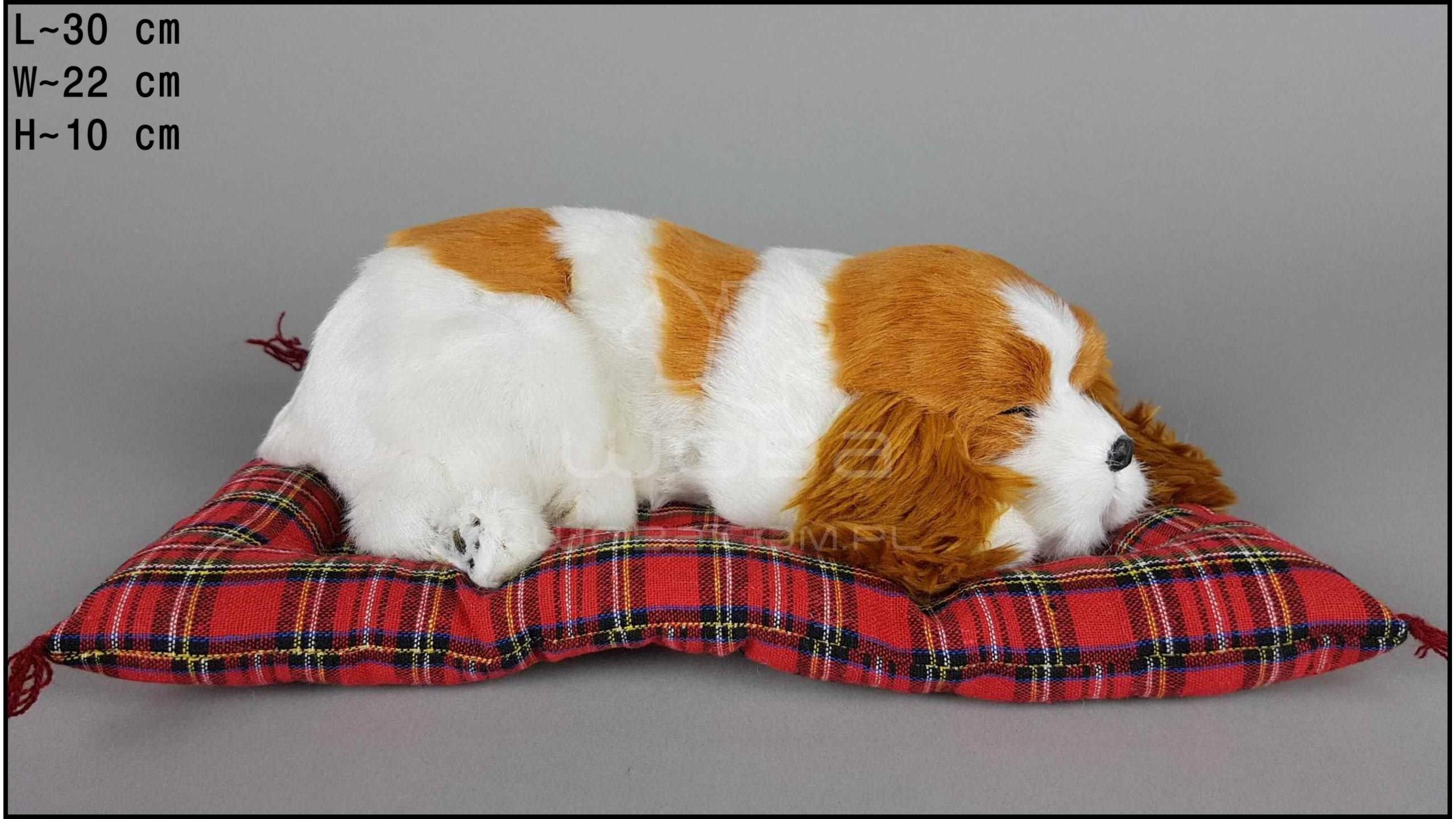 Pies Charles Spaniel na poduszce Rozmiar L - Żółty