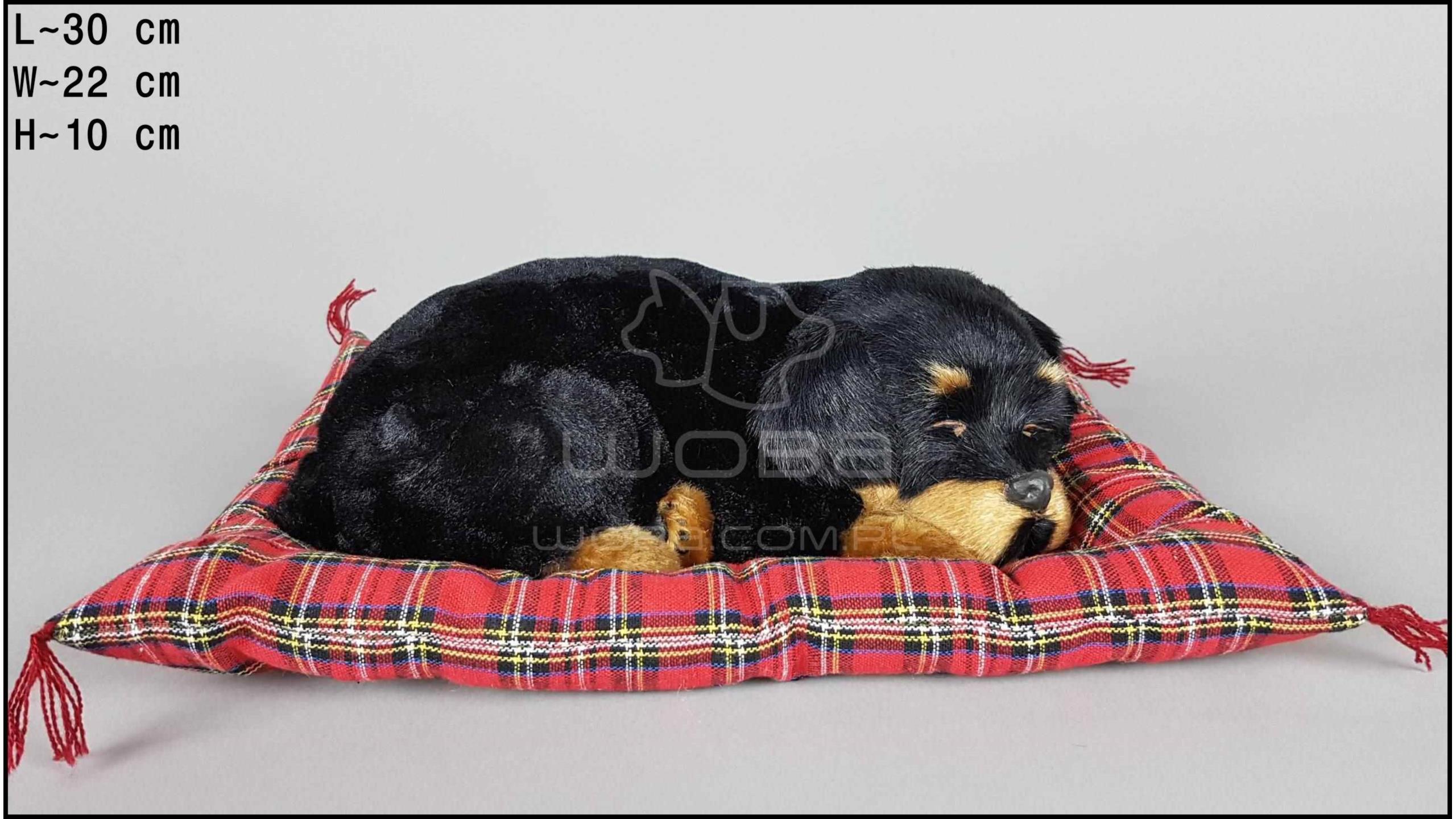 Pies Rottweiler na poduszce Rozmiar L