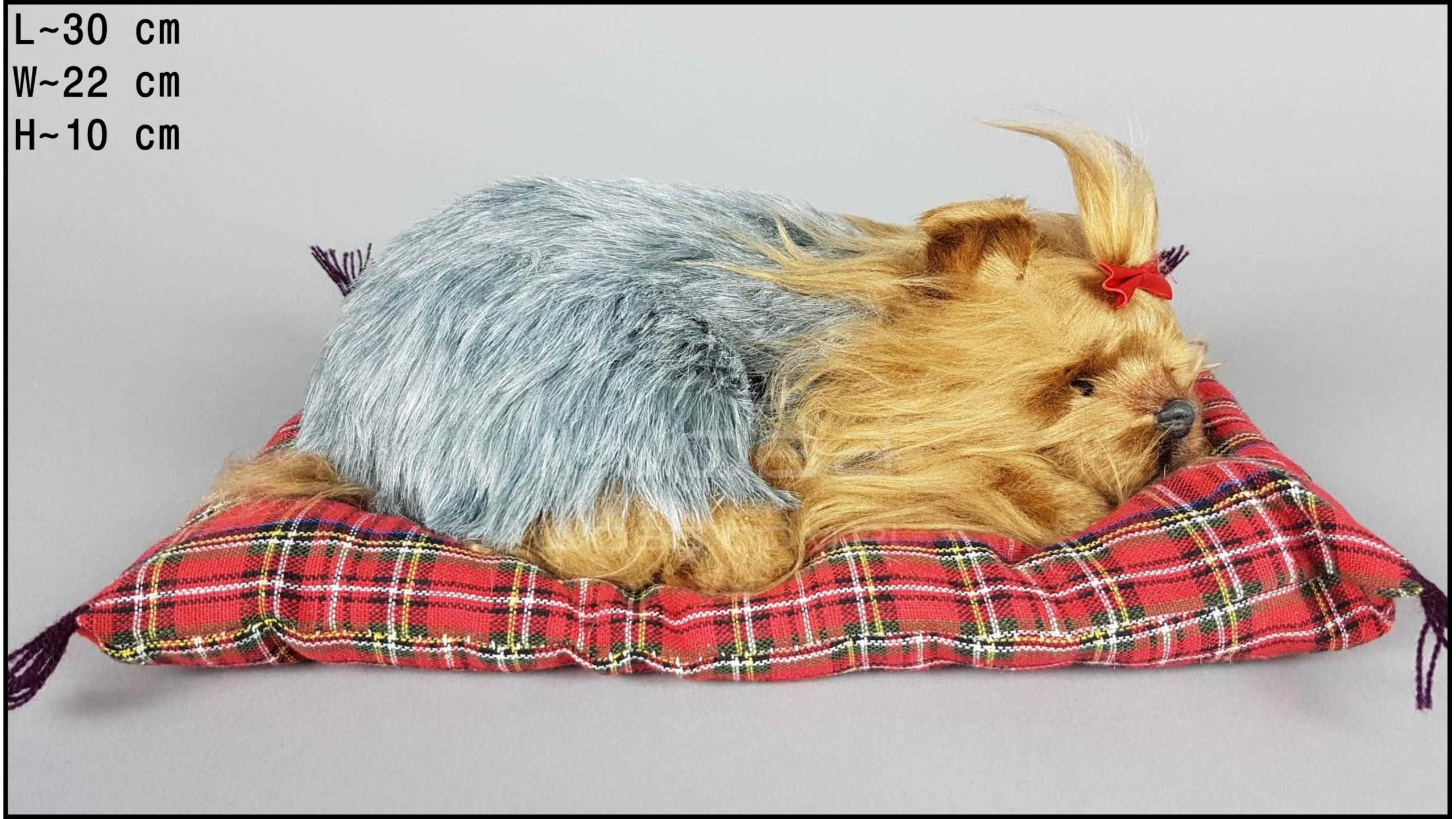 Yorkshire Terrier on a pillow - Size L